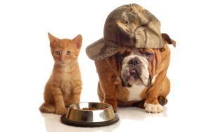 Velkommen til hunde og katte hjemmesiden
