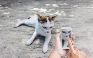 Katte Videoer
