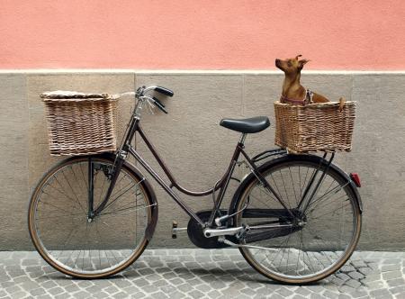 Cykeltrailer til hunde