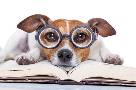 Hunde bøger