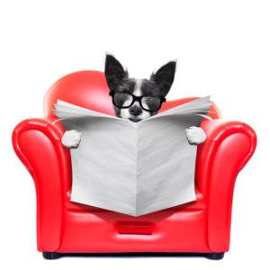 Hunde møbler