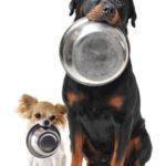 First Buddy Hundefoder