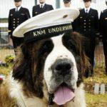 Hunden Bamse blev legendarisk under anden verdenskrig