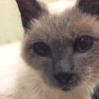 Verdens ldste nulevende kat Scooter! Ls mere p vores hjemmeside