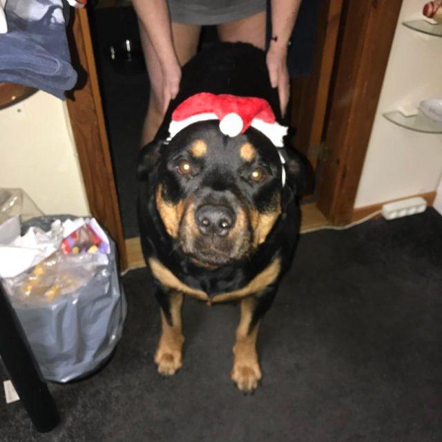 Ludwig som julemanden den dejlige hund!