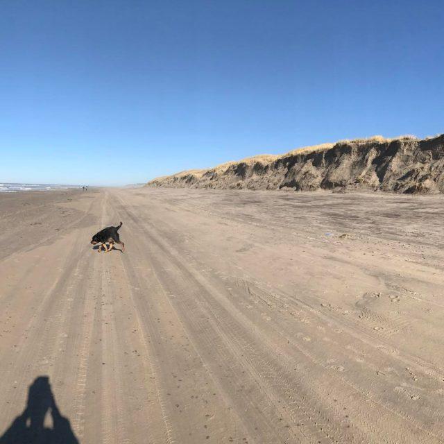 Panorama billede fra strandturen med Ludwig i dag