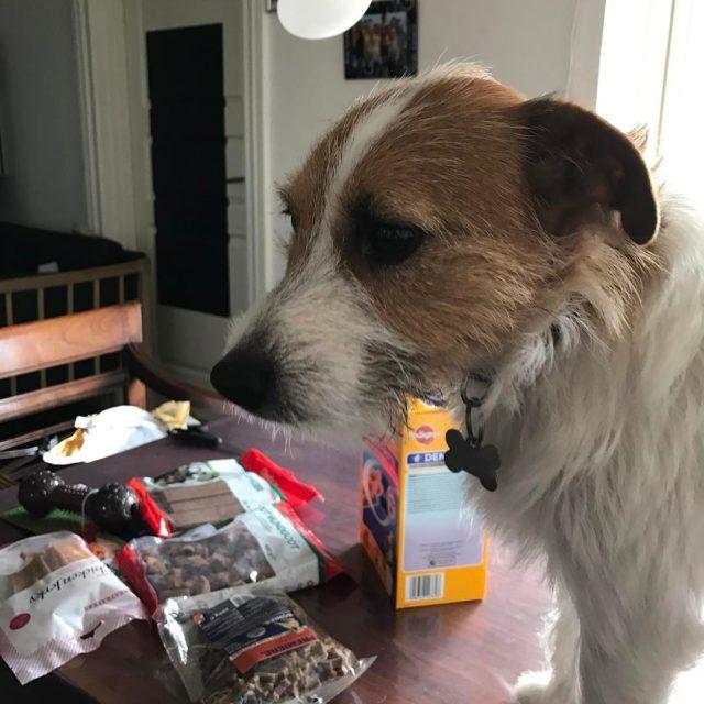 Min sster hund havde fdselsdag han skulle da lige havehellip