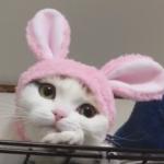 Bedårende kat