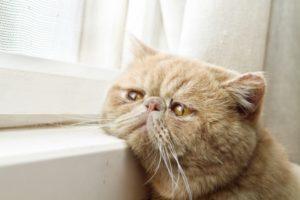 Gamle katte