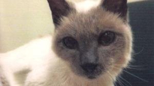Verdens ældste nulevende kat