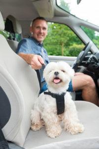 Sikkerhedssele til hund
