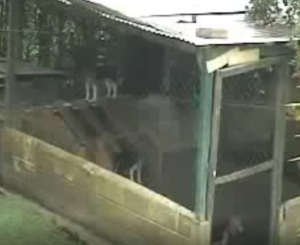 Hunde er ikke dumme