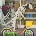 Hund på cykel