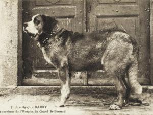 Redningshunden Barry